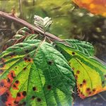 Woodland Gems Art Gallery – Bramble Leaves On The Turn – Painting By Cowfold West Sussex Artist Carole Rupniak
