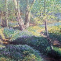 Ashdown Bluebells, East Sussex – Pastel Landscape Artist – Juliet Murray – Sussex Artists Gallery