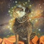 Cosmic Dog Portrait – Tiggy – Limited Edition Giclee Prints – West Sussex Artist Tom Gillings – Sussex Artists Gallery
