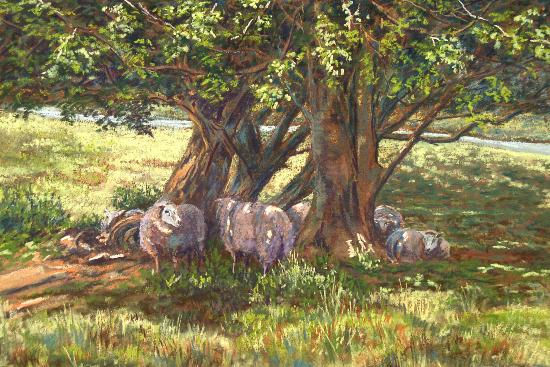 Sheep in Dappled Shade, Juliet Murray - East Sussex Artist - Pastel Landscape Artist - Sussex Artists Gallery