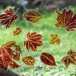 Autumn Leaves – Glass Painting – Patsy Dinc – Sussex Artists Gallery – Glass Painting and Watercolour Artist