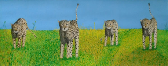 Cheetahs at the O.K. Corral - Horsham, West Sussex Artist - Roger Gasson