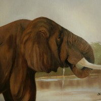My Elephant – Animal Oil Painting – Jenny Rabie – Crawley, West Sussex Artist – Sussex Artists Gallery