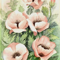 Pink Poppies – Floral Art Prints – Sussex Artist – Audrey Laycock – Watercolour Gallery