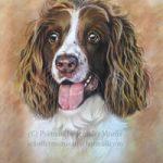 Portrait of Dog – Sadie