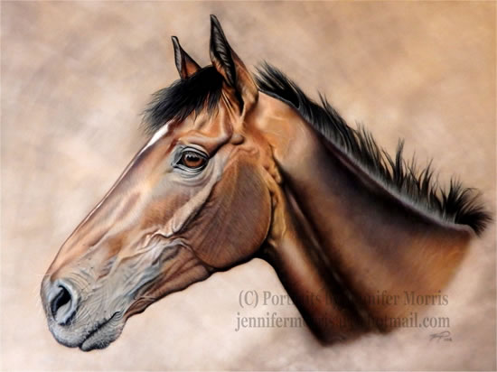 Portrait Of Horse- Guns Of Leros - Jennifer Morris - Pet Portraiture Artist - Sussex Art Gallery