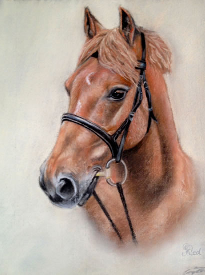 Portrait Of Horse- Red - Jennifer Morris - Equestrian and Pet Portraiture Artist - Sussex Art Gallery