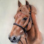 Portrait of Horse – Red