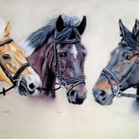 Portrait of Horses – Martha, Henry and Donna