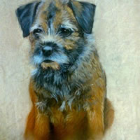 Portrait of Dog – Meg