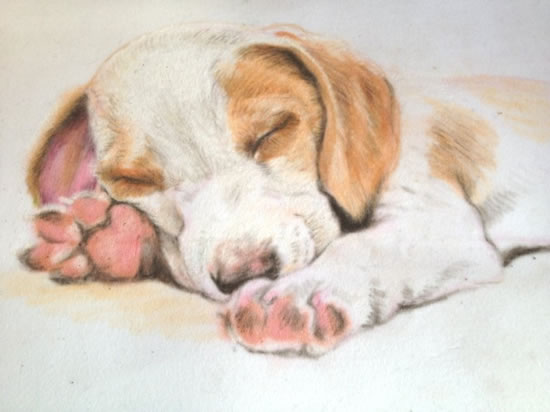 Portrait of Sleeping Puppy - Snooze - Jennifer Morris - Pet Portraiture Artist - Sussex Art Gallery