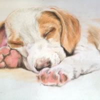 Portrait of Sleeping Puppy – Snooze