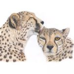 Cheetahs – Animal Art – Original Paintings and Giclee Fine Art Prints – David Shepherds Wildlife Artist of the Year