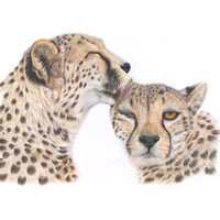 Cheetahs – Animal Art – Original Paintings and Giclee Fine Art Prints – David Shepherds Wildlife Artist of the Year