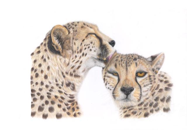 Cheetahs - Animal Art - Original Paintings and Giclee Fine Art Prints - David Shepherds Wildlife Artist of the Year