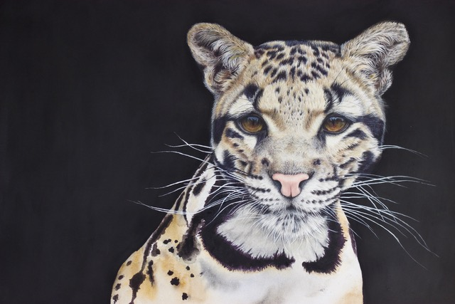 Clouded Leopard - Animal Art - Original Painting by Claire Heffron Award Winning Wildlife Artist