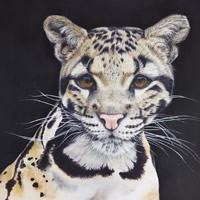 Clouded Leopard  – Animal Art – Original Painting by Claire Heffron Award Winning Wildlife Artist