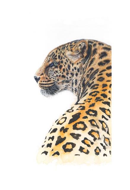 Leopard - Giclee Fine Art Prints - Award Winning Wildlife Artist Claire Heffron