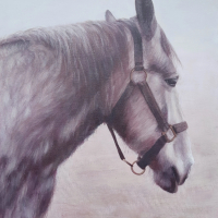 Equine Art – Horse Portrait – Percheron – East Harting Sussex Artist Helen Thair