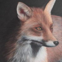 Fox Portrait – Sussex Hampshire border Portrait Artist Helen Thair