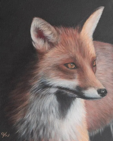Fox Portrait - Sussex Hampshire border Portrait Artist Helen Thair