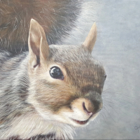 Grey Squirrel – Wildlife painting by East Harting Sussex Hampshire Border Artist Helen Thair