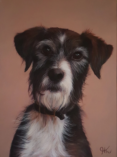 Pet Portraits - Dog - Sussex Hampshire border Artist Helen Thair
