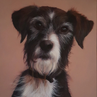Pet Portraits – Dog – Sussex Hampshire border Artist Helen Thair