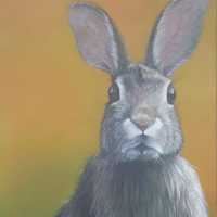 Rabbit – Wild Animal and Pet Portraits – Sussex Artist Helen Thair