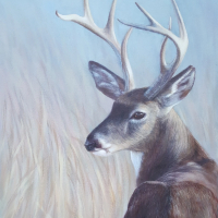 Stag – Wildlife Portrait by Animal Artist Helen Thair from East Harting Sussex