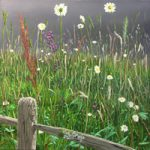 Wild Flower Meadow – Nature Art Gallery