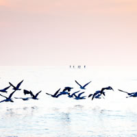 Brighton Paddle Boarders and Sea Birds - Fine Art Photography