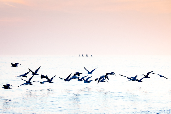 Brighton Paddle Boarders and Sea Birds - Fine Art Prints