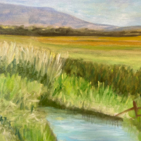 Pevensey Levels East Sussex – Landscape Gallery – Frinton-on-Sea Artist Sue Branch