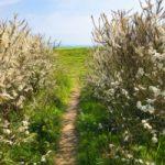 Seaford Head Bushes with Path – Seaford East Sussex Digital Artist Sam Taylor