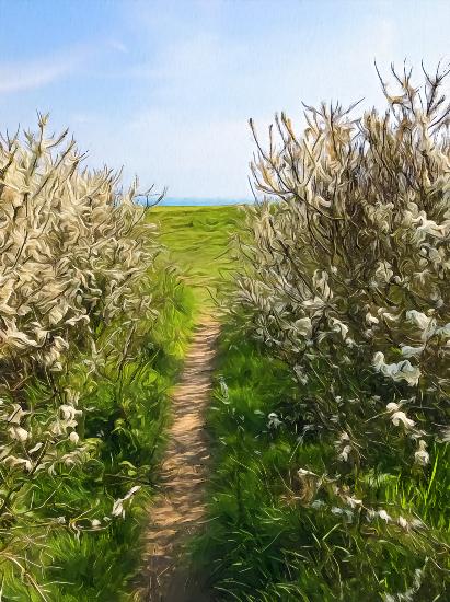 Seaford Head Bushes with Path - Digital Artist - Seaford East Sussex Artist Sam Taylor