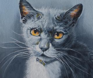 Cat Portrait by Crowborough Arts member Nathalie Bos - Animal Artist