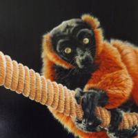 Curious Lemur – Oil on Canvas – Animal and Wildlife Artist Nathalie Bos