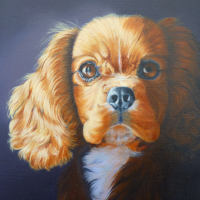 Dog Portrait – Pet Portraits by Mayfield East Sussex Animal Artist Nathalie Bos