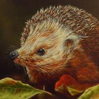 Hedgehog – Winter is Coming – Animal Artist and Crowborough Arts member Nathalie Bos