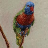 Rainbow Lorikeet – Oil Painting – East Sussex Bird Artist Nathalie Bos